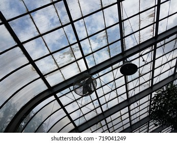dirty glass ceiling of a greenhouse