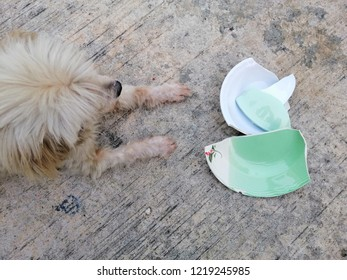 dirty gog with broken plate