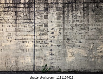Dirty Gray Cinder Block Wall with Graffiti Small Green Weed Growing in Corner  Run Down Grunge Background Lines Pattern Texture Geometric Design