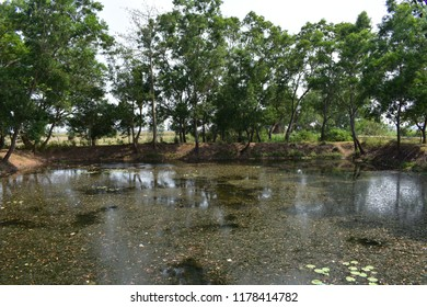 Dirty and horror pond. Located at Odisha, India. The villagers fear to use this pond. Some spiritual incident happens in this pond.
