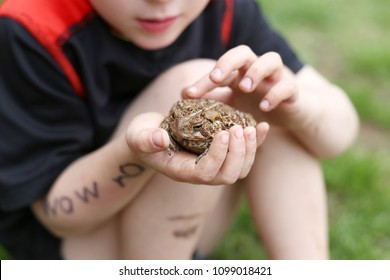 A dirty little boy who has been playing outside is holding a large Common American Toad in his hands.