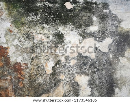 Dirty Mold On Concrete Floor Stock Photo Edit Now 1193546185