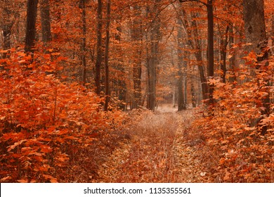 Dirty road in autumn beech forest, fall in foliar forest.