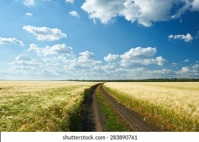 dirty road on wheat field and blue sky landscape