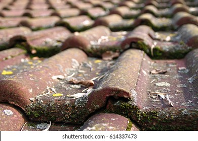 Dirty roof tiles with dense moss requiring cleaning