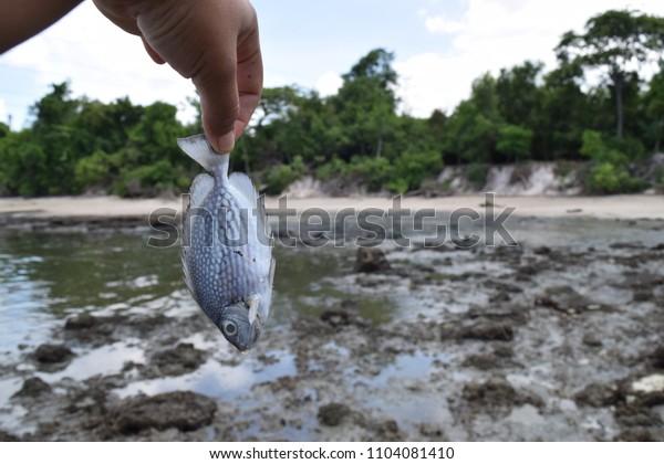 dirty sea industrial area Dead fish