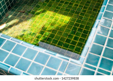 Dirty spa pool, algae growing in shallow water in swimming pool, pool service and maintenance concept