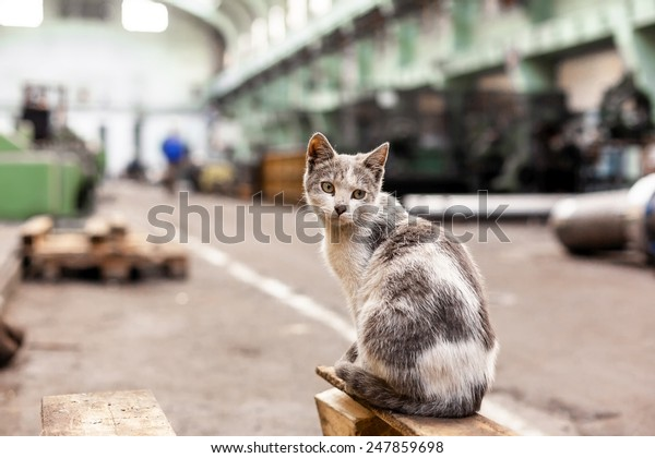 Dirty street cat sitting in factory closeup photo