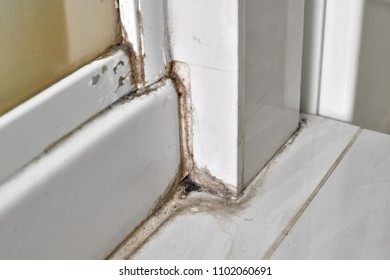 Dirty tiles in a bathroom shower of a hotel room with sealant covered in mould and mildew