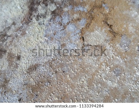 Dirty White Mold On Wooden Floor Stock Photo Edit Now 1133394284
