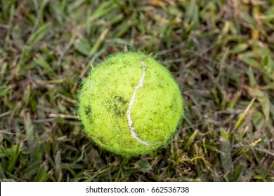 Dirty Yellow Tennis Ball