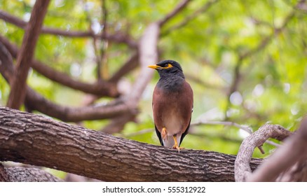 disabled bird catching the tree branch with blurred green leave on background, wildlife photography, birds,