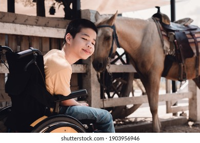 Disabled child on wheelchair is playing, learning and exercise in the outdoor like other people,Horse barn background in summer,Lifestyle of special child in education age,Happy disability kid concept