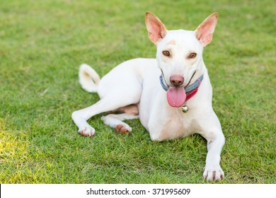 Disabled dog three legs smiling