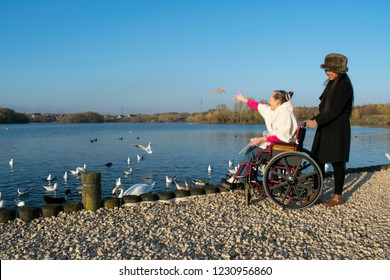 A Disabled Female in her Wheelchair and her Carer Feeding the Birds at Lake
