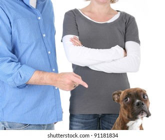 Disappointed Owners Scolding Boxer Dog