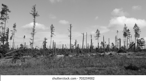 Disaster in Kashubia forest, Poland.