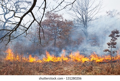 Disaster in oak forest, fire in the woods