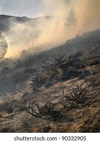 disastrous consequences of forest fires