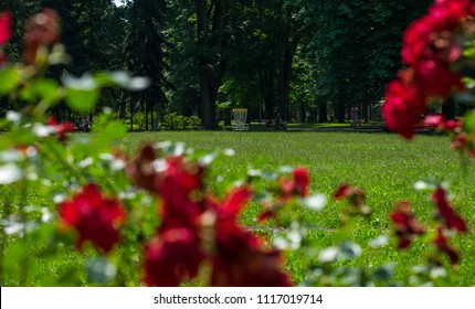Disc Golf Basket and roses