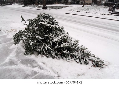 Discarded Christmas tree, outside on the side of the road with light snow on the ground.