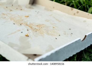 A discarded empty pizza box lies on the ground. in the box, the ants eat up the remains of human food. sunny day