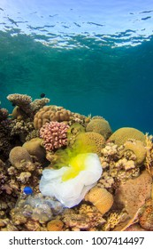 Discarded Plastic bags and bottles lie underwater on the coral reef
