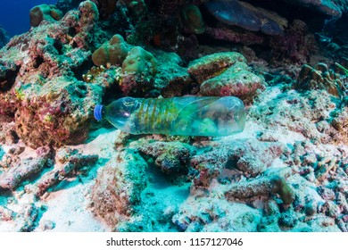 A discarded plastic bottle on the seabed of a tropical coral reef.