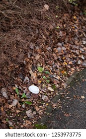 Discarded plastic coffee cup lid discarded litter in hedge in winter