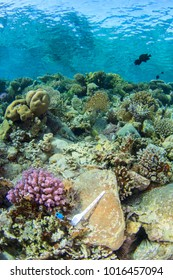 Discarded Single use plastic fork and other plastic rubbish thrown away lies on pristine coral reef