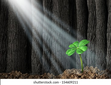 Discover opportunity and prosperity finding success as a business concept with a green four leaf clover growing in a dark forest with beams of light shinning on the icon of fortune and luck.