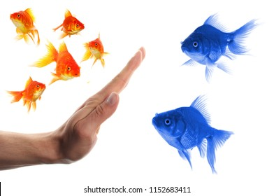 discriminating outsider racism or intolerance concept with goldfish and hand