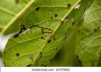 diseases on leaves