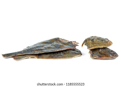 Diseboweled and beheaded fresh raw flatfish isolated on white background