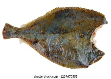 Diseboweled and beheaded fresh raw flatfish isolated on white background