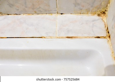 Disgusting home shower bathroom tile sealant with mould and mildew