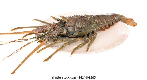 dish of fresh red claw crayfish or fash water lobster alive set isolate on white background