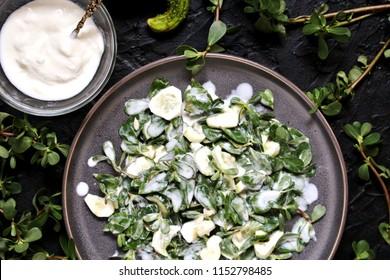 dish of purslane. potulak-edible useful weed. Purslane salad with cucumber and yogurt. Turkish, Greek, Mexican cuisine