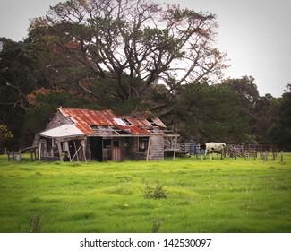 dishevel  shed