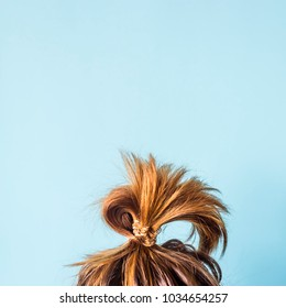 A disheveled bunch on the head of a dark-haired woman. The hair is tied with a transparent spiral elastic band. Modern fast hairstyle. Against a blue background. Copyspace