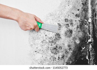 Disinfection of mold. A hand with a spatula removes the black fungus from the white wall. Aspergillus.