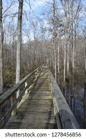 Dismal Swamp boardwalk in Big Hill Pond State Park Tennessee