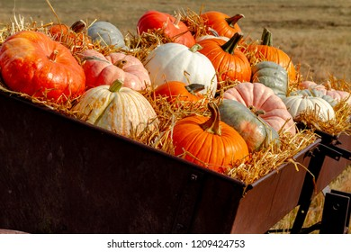 Display of colorful fall pumpkins sitting in hay on old farm machinery