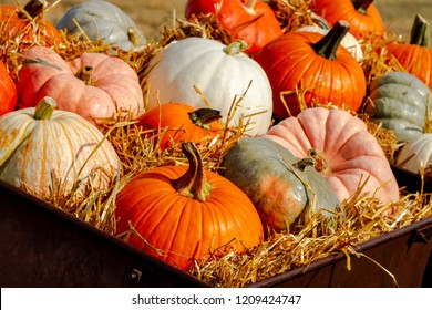 Display of colorful pumpkins sitting in hay on sunny autumn morning on rural ranch road