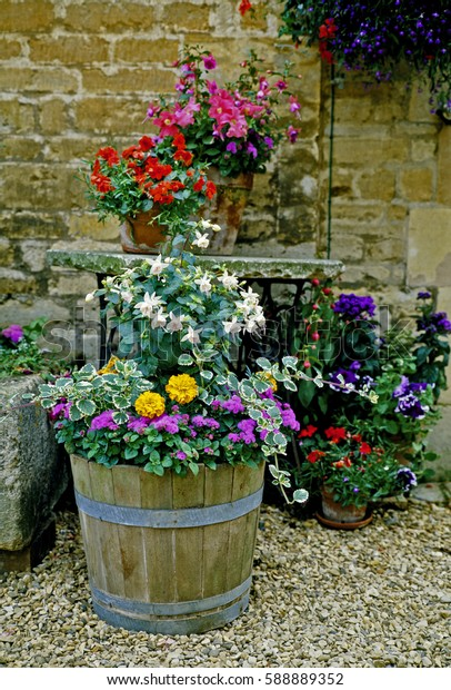 Display of Colourful Planted Containers in a garden courtyard