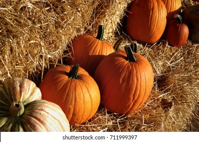 Display of fall pumpkin, gourd and squash fruits on bales of hay