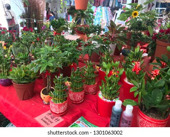 Display of indoor plants on shop table considered auspicious for the Chinese New Year in Clementi, Singapore February 1st 2019.
