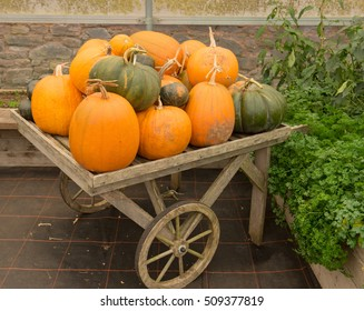 Display of Pumpkins (Cucurbita maxima) on a Vintage Wooden Cart in a Greenhouse at Knightshayes in Rural Devon, England, UK