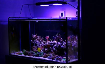 Display saltwater coral reef aquarium