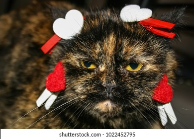 Dissatisfied cat that hates st. Valentine's day